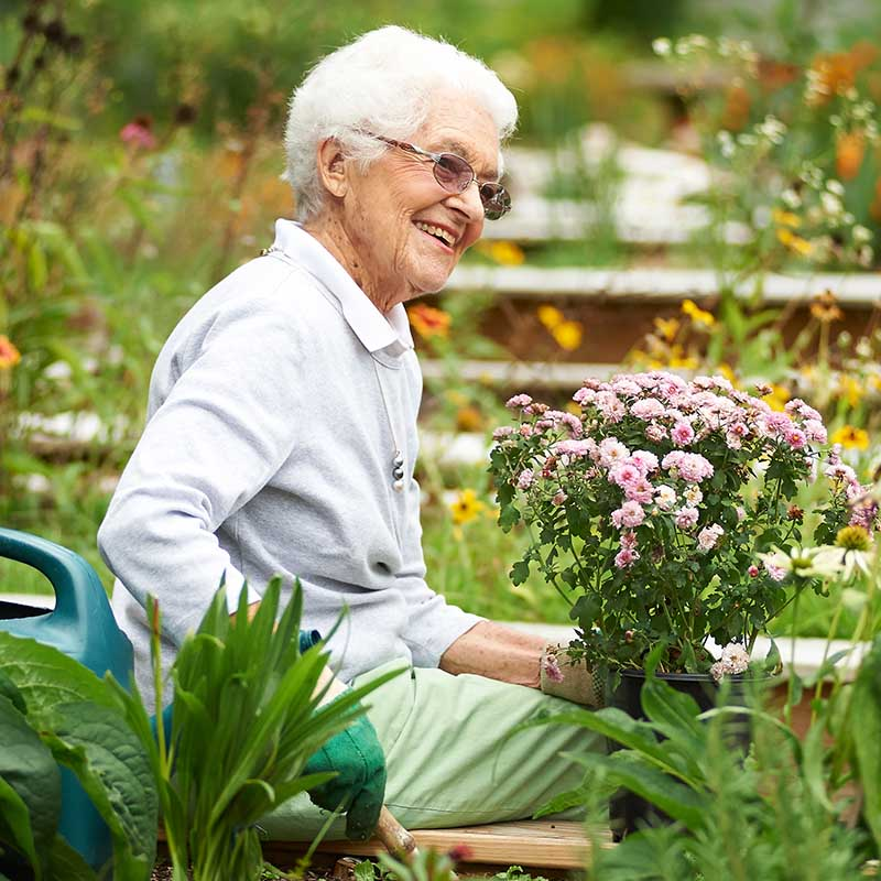 elderly woman planting flowers in garden outside